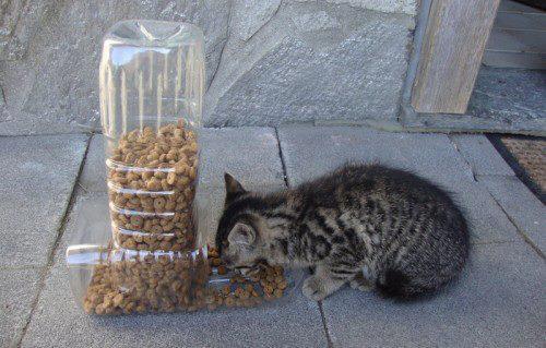 reciclar-comida-para-gatos